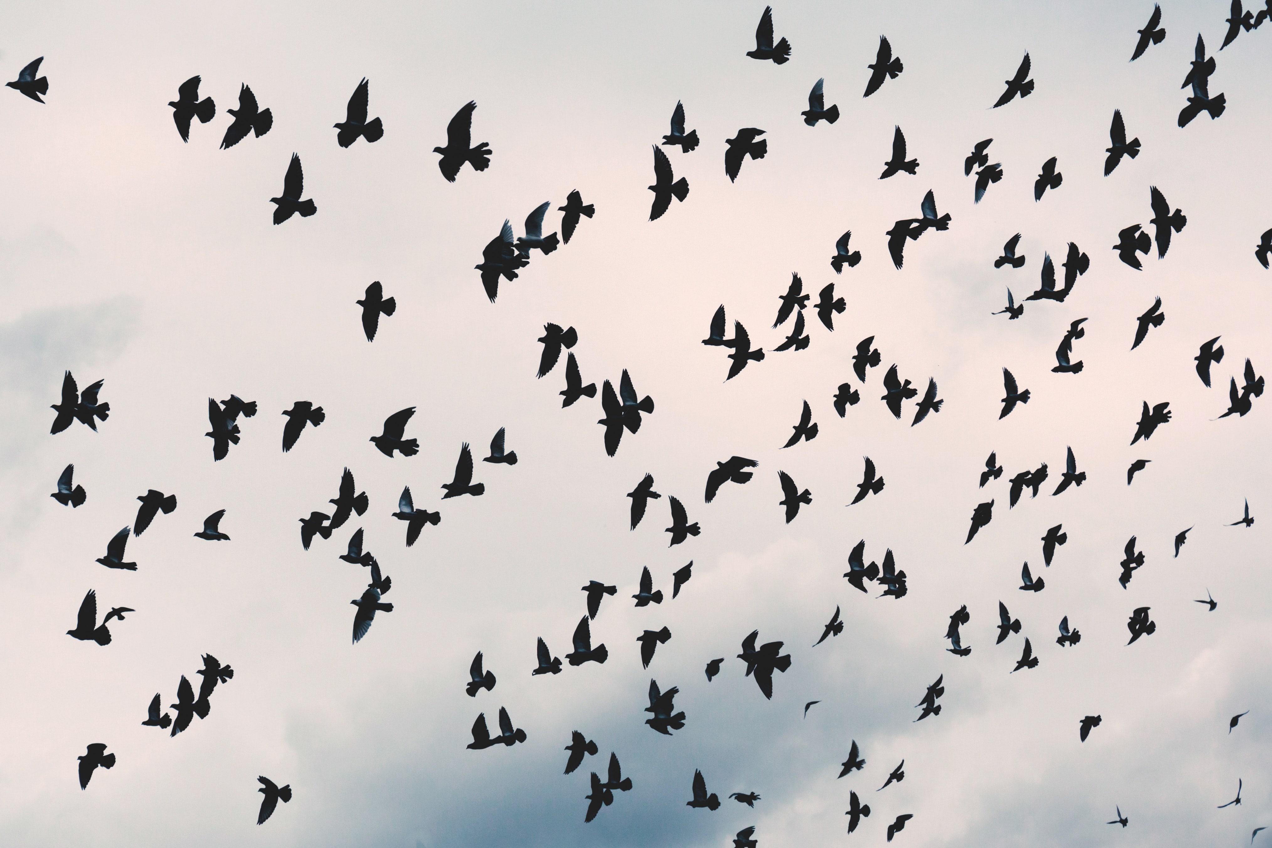 animal-avian-bird-203088-min